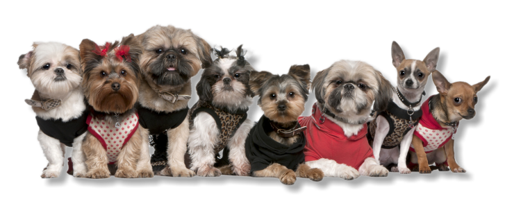 About Suwannee Pet Grooming